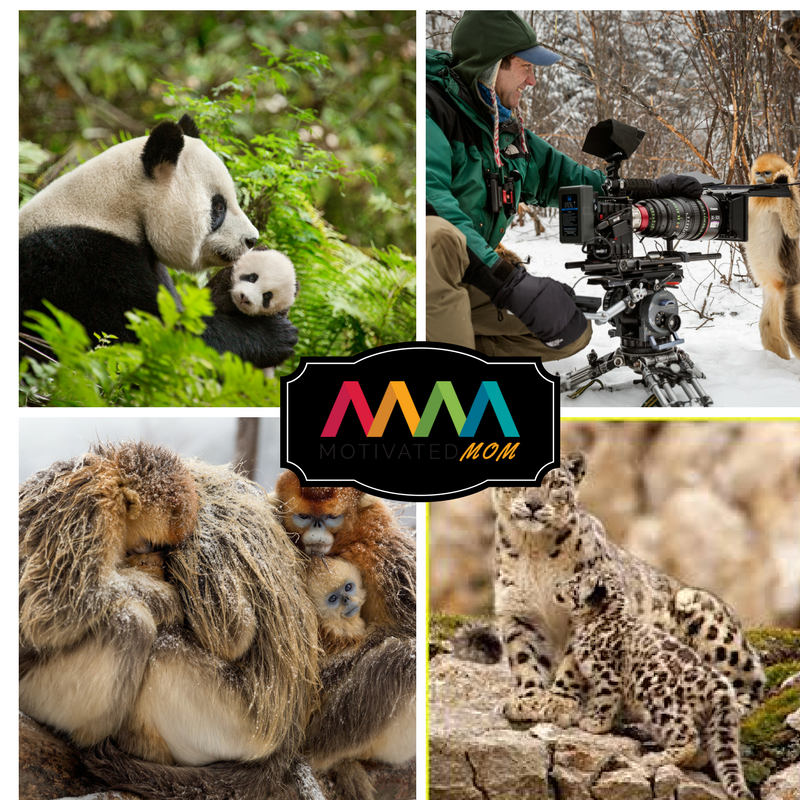 disneynature-born-in-china-pandas-snow-leopards-and-monkeys