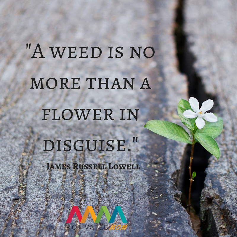 a-weed-is-no-more-than-a-flower-in-disguise-james-Russell-Lowell-quote